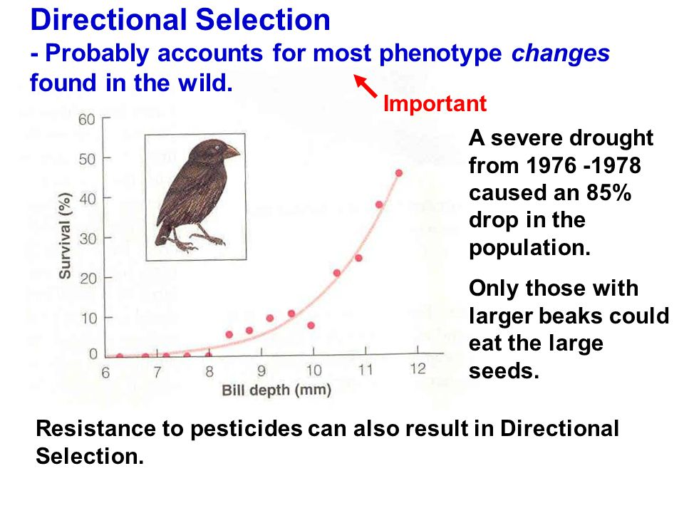 Directional Selection - Probably accounts for most phenotype changes found in the wild.