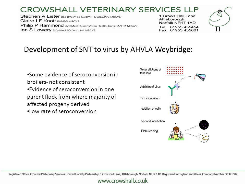 Development of SNT to virus by AHVLA Weybridge: Some evidence of seroconversion in broilers- not consistent Evidence of seroconversion in one parent flock from where majority of affected progeny derived Low rate of seroconversion