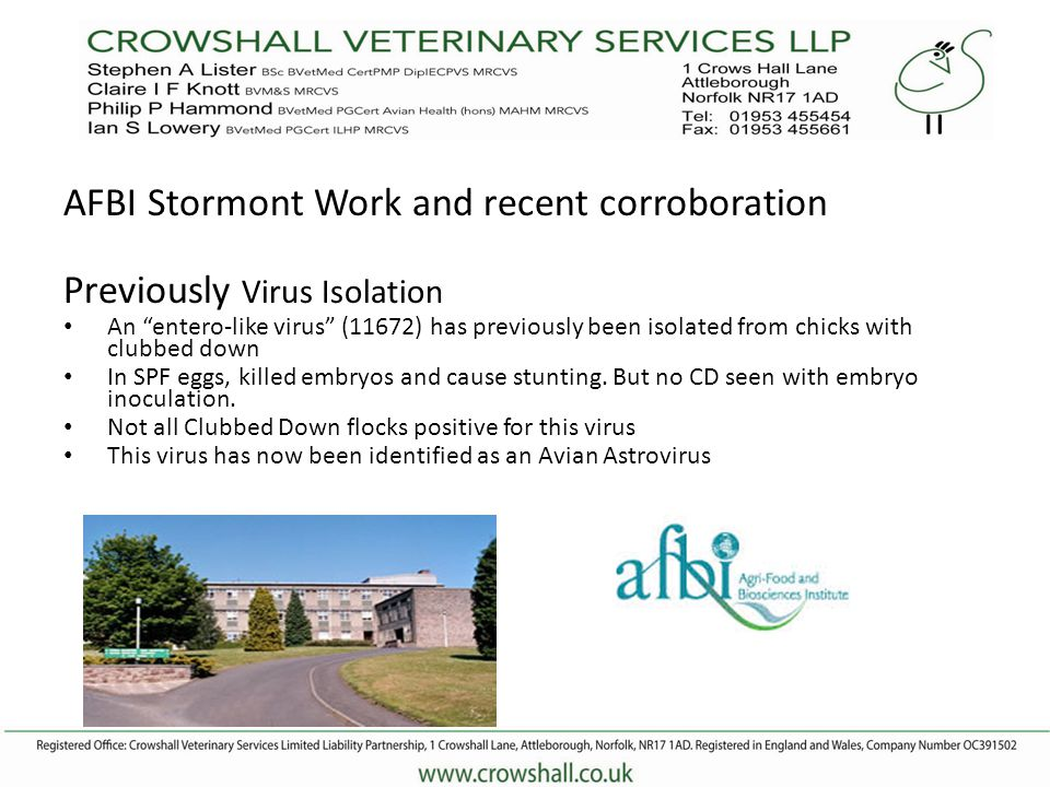 AFBI Stormont Work and recent corroboration Previously Virus Isolation An entero-like virus (11672) has previously been isolated from chicks with clubbed down In SPF eggs, killed embryos and cause stunting.