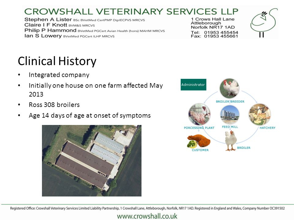 Clinical History Integrated company Initially one house on one farm affected May 2013 Ross 308 broilers Age 14 days of age at onset of symptoms