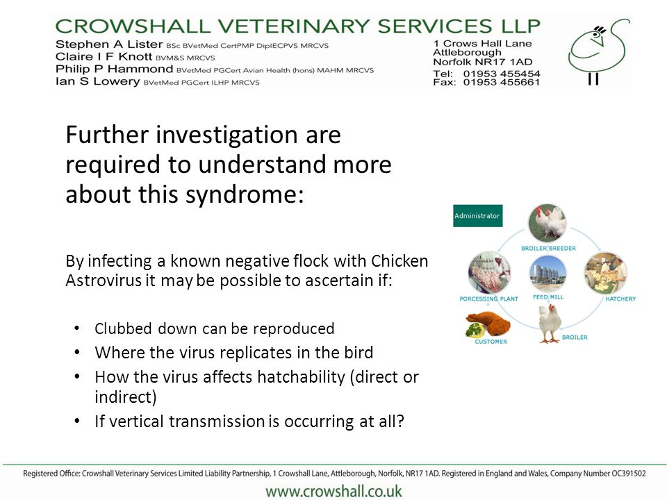 Further investigation are required to understand more about this syndrome: By infecting a known negative flock with Chicken Astrovirus it may be possible to ascertain if: Clubbed down can be reproduced Where the virus replicates in the bird How the virus affects hatchability (direct or indirect) If vertical transmission is occurring at all