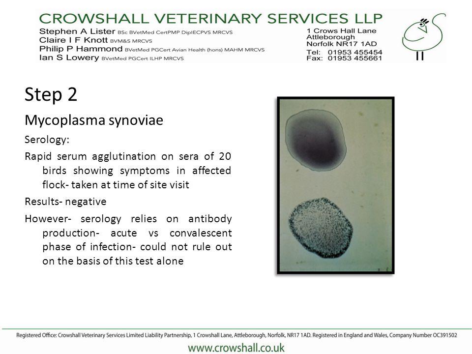 Mycoplasma synoviae PCR PCR (Birds NOT on antibiotics) CULTURE- Chanocks- NEGATIVE NOT MS INFECTION