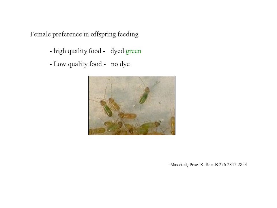 Female preference in offspring feeding - high quality food - dyed green - Low quality food - no dye Mas et al, Proc.