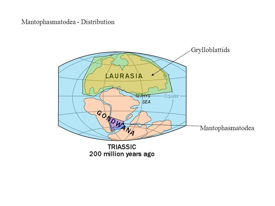 Mantophasmatodea - Distribution Grylloblattids Mantophasmatodea