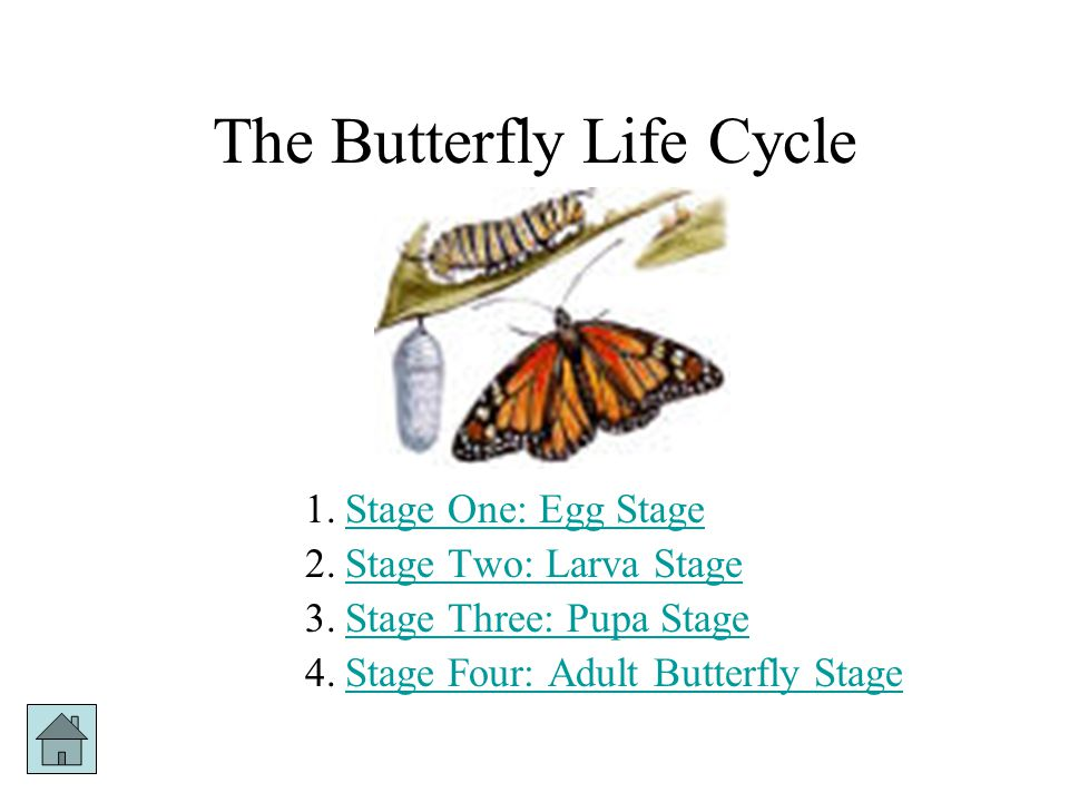 Life Cycles The Life Cycle of a Butterfly The Life Cycle of a Frog