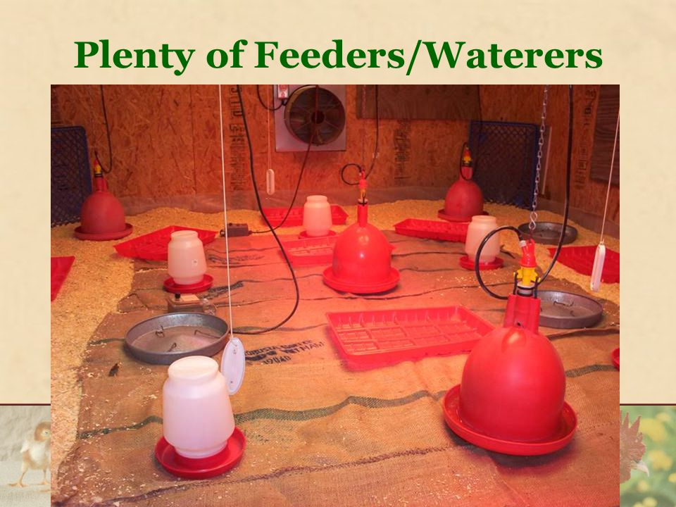 Plenty of Feeders/Waterers