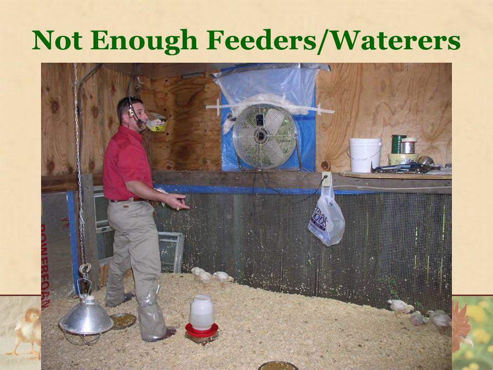 Not Enough Feeders/Waterers