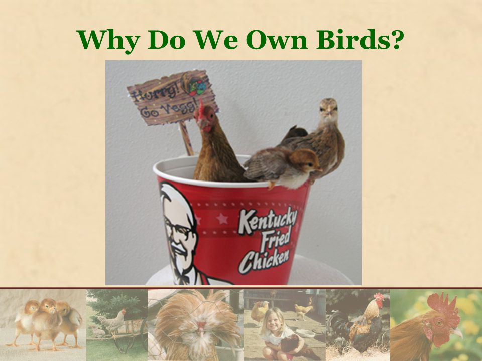 Why Do We Own Birds