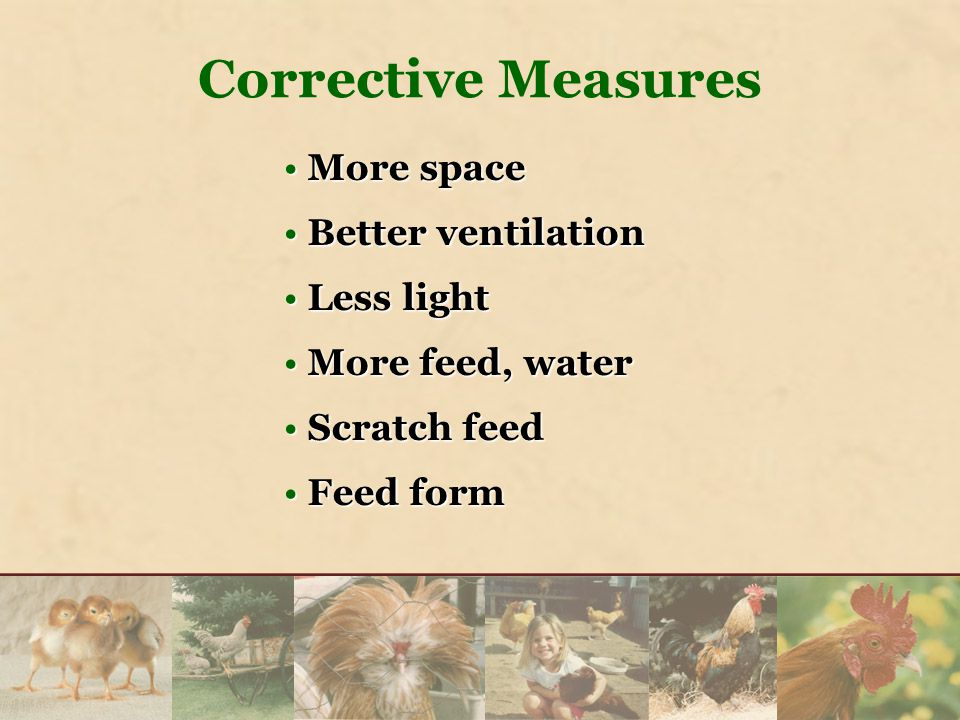 More spaceMore space Better ventilationBetter ventilation Less lightLess light More feed, waterMore feed, water Scratch feedScratch feed Feed formFeed form Corrective Measures