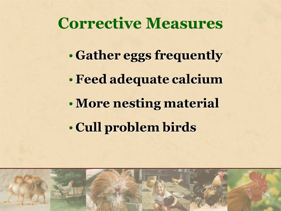 Gather eggs frequentlyGather eggs frequently Feed adequate calciumFeed adequate calcium More nesting materialMore nesting material Cull problem birdsC