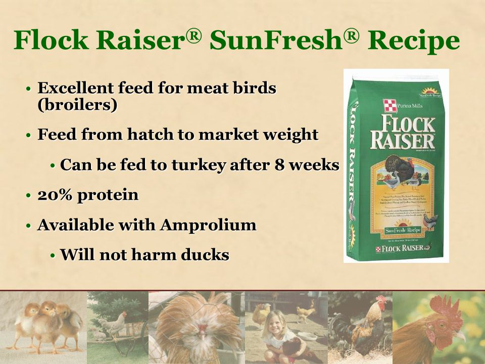 Excellent feed for meat birds (broilers)Excellent feed for meat birds (broilers) Feed from hatch to market weightFeed from hatch to market weight Can