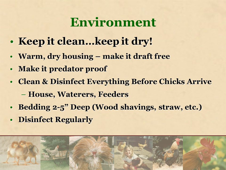 Environment Keep it clean…keep it dry!Keep it clean…keep it dry! Warm, dry housing – make it draft freeWarm, dry housing – make it draft free Make it