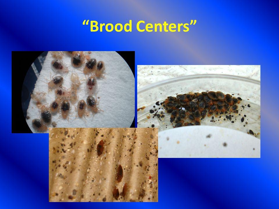 Brood Centers