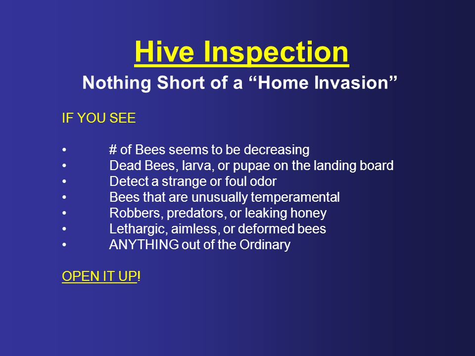 "Hive Inspection Nothing Short of a ""Home Invasion"" IF YOU SEE # of Bees seems to be decreasing Dead Bees, larva, or pupae on the landing board Detect"