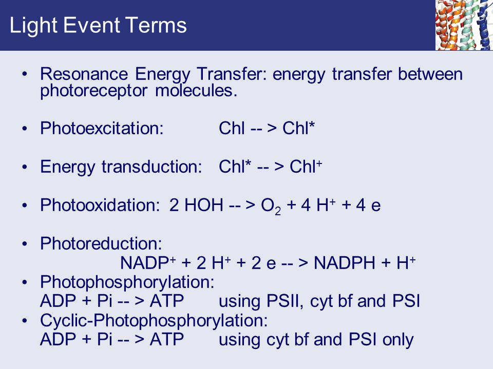 Light Event Terms Resonance Energy Transfer: energy transfer between photoreceptor molecules. Photoexcitation: Chl -- > Chl* Energy transduction:Chl*