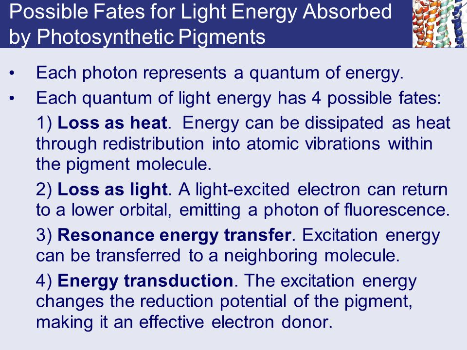 Possible Fates for Light Energy Absorbed by Photosynthetic Pigments Each photon represents a quantum of energy. Each quantum of light energy has 4 pos