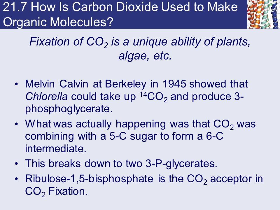 21.7 How Is Carbon Dioxide Used to Make Organic Molecules? Fixation of CO 2 is a unique ability of plants, algae, etc. Melvin Calvin at Berkeley in 19
