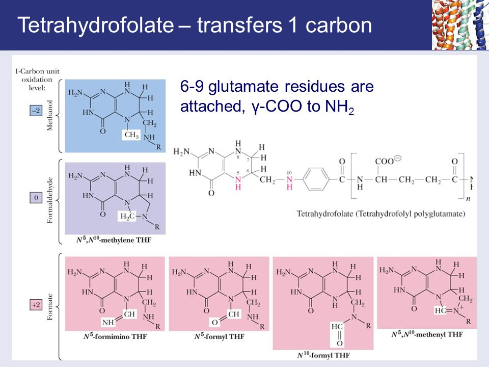 Tetrahydrofolate – transfers 1 carbon 6-9 glutamate residues are attached, γ-COO to NH 2
