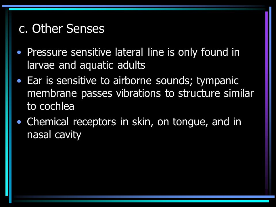 c. Other Senses Pressure sensitive lateral line is only found in larvae and aquatic adults Ear is sensitive to airborne sounds; tympanic membrane pass