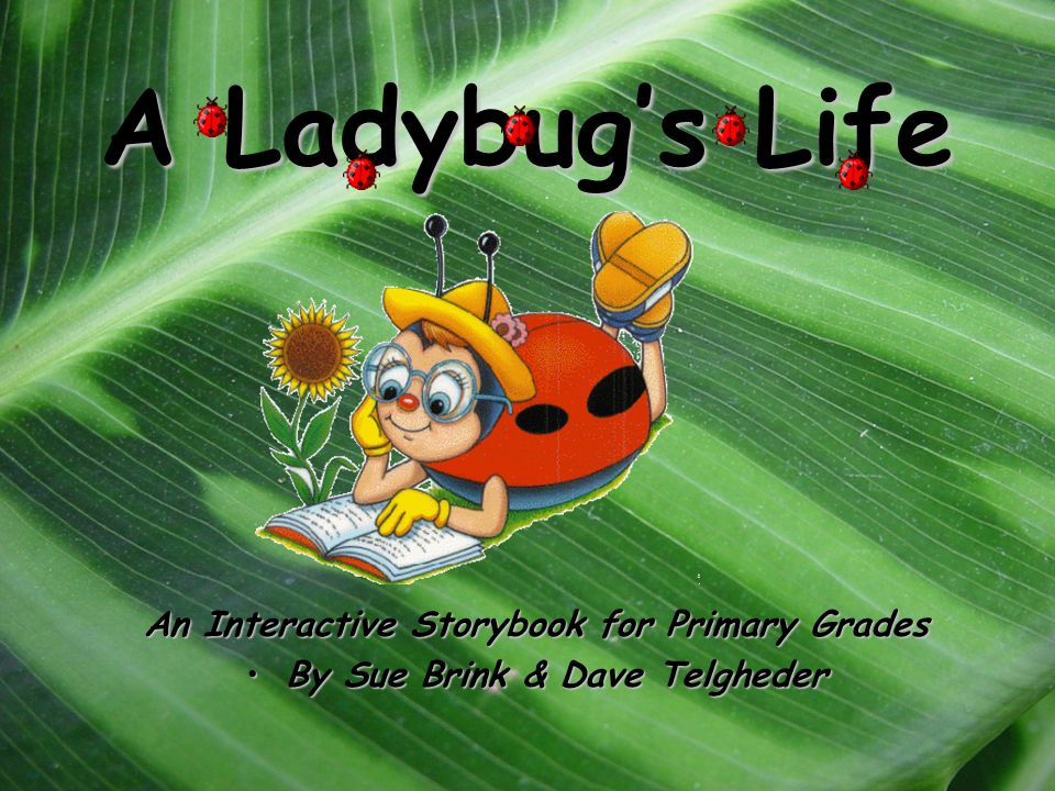 A Ladybug's Life An Interactive Storybook for Primary Grades By Sue Brink & Dave TelghederBy Sue Brink & Dave Telgheder