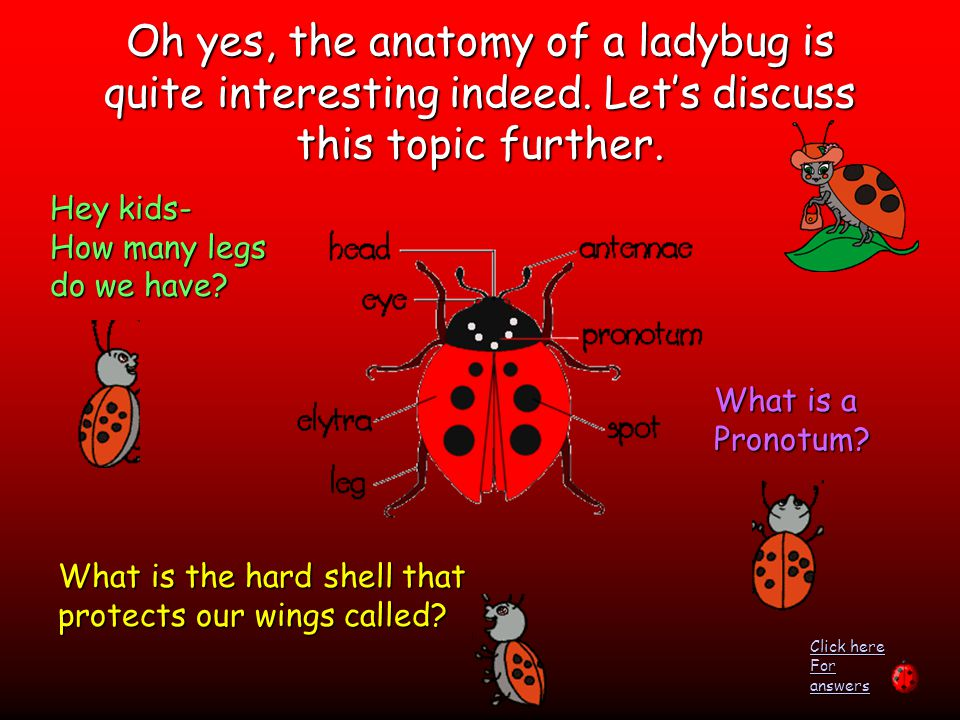 Oh yes, the anatomy of a ladybug is quite interesting indeed.