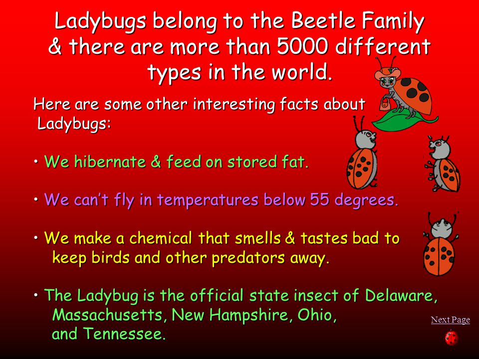 Here are some other interesting facts about Ladybugs: Ladybugs: We hibernate & feed on stored fat.