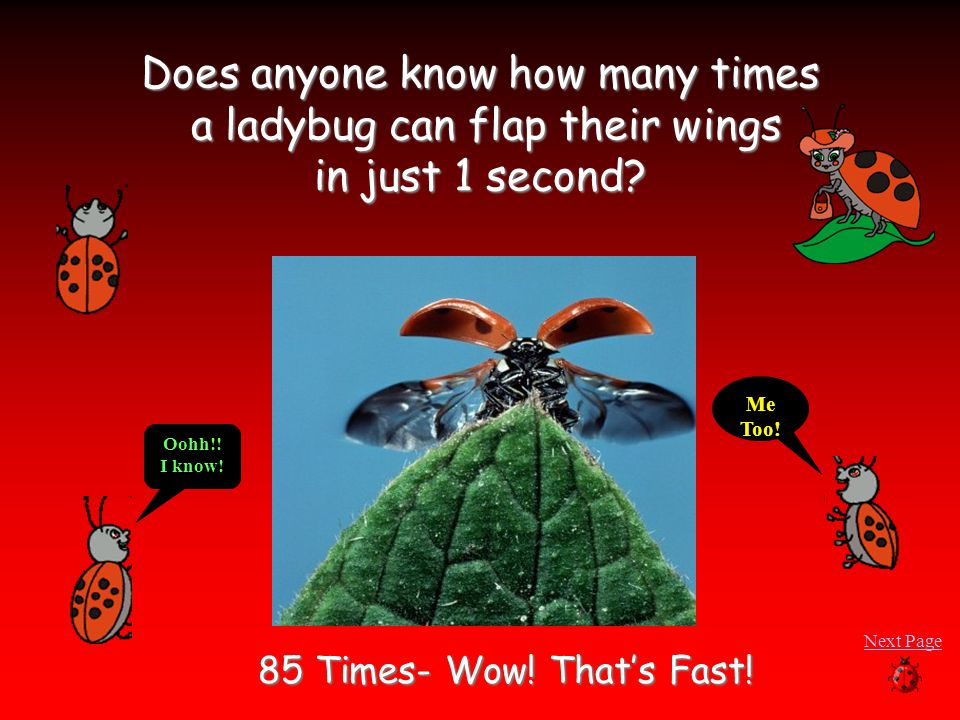 Does anyone know how many times a ladybug can flap their wings in just 1 second.