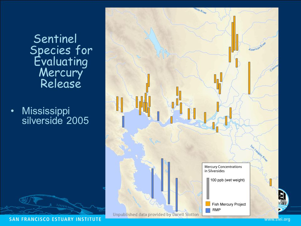 Unpublished data provided by Darell Slotton Sentinel Species for Evaluating Mercury Release Mississippi silverside 2005