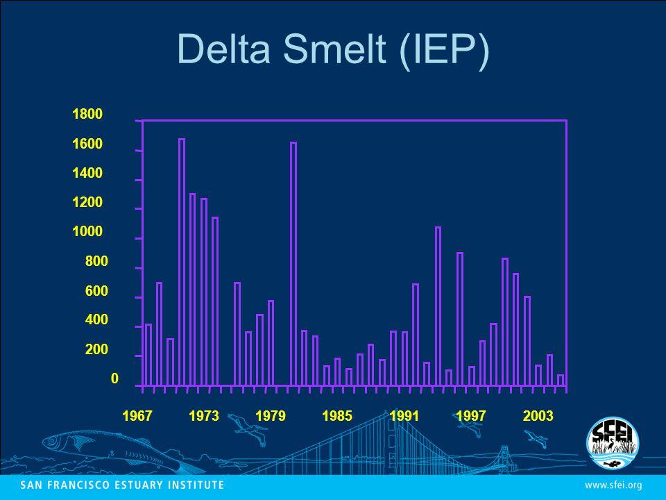 Delta Smelt (IEP)