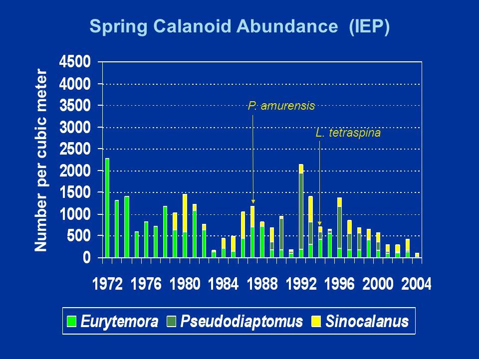 Spring Calanoid Abundance (IEP) P. amurensis L. tetraspina Number per cubic meter