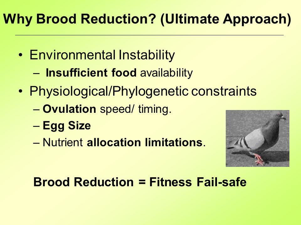 Why Brood Reduction.