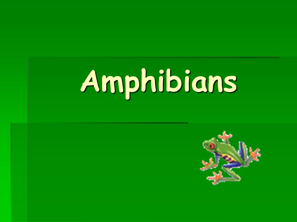 Amphibians enter a state of dormancy or torpor when conditions are unfavorable.