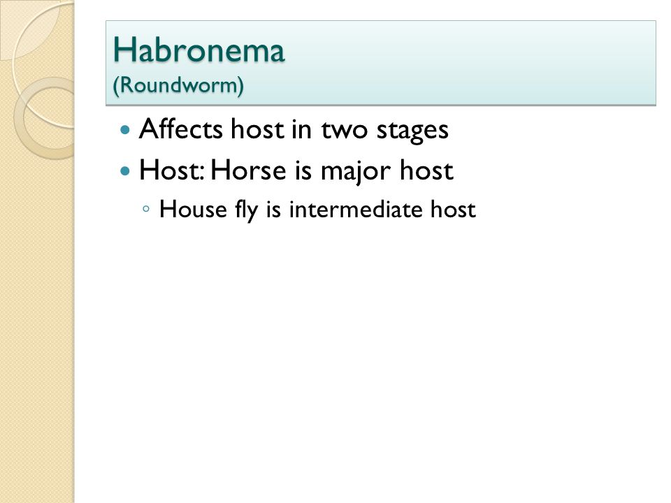 Habronema (Roundworm) Affects host in two stages Host: Horse is major host ◦ House fly is intermediate host