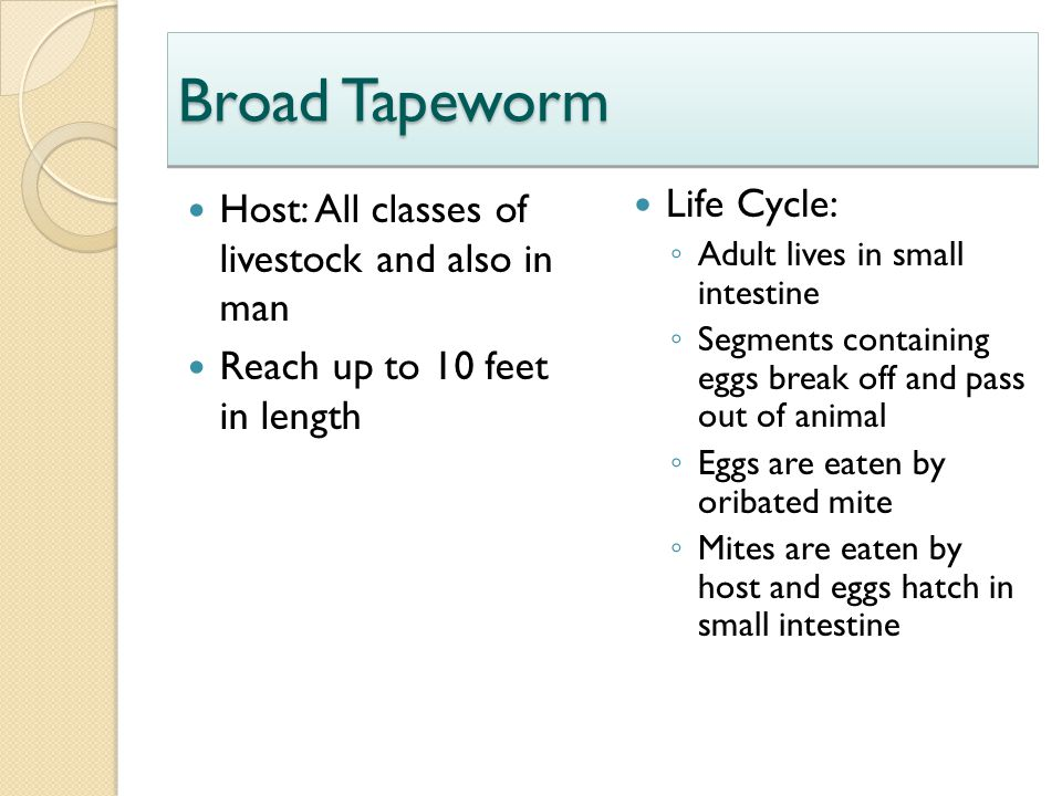 Broad Tapeworm Host: All classes of livestock and also in man Reach up to 10 feet in length Life Cycle: ◦ Adult lives in small intestine ◦ Segments co