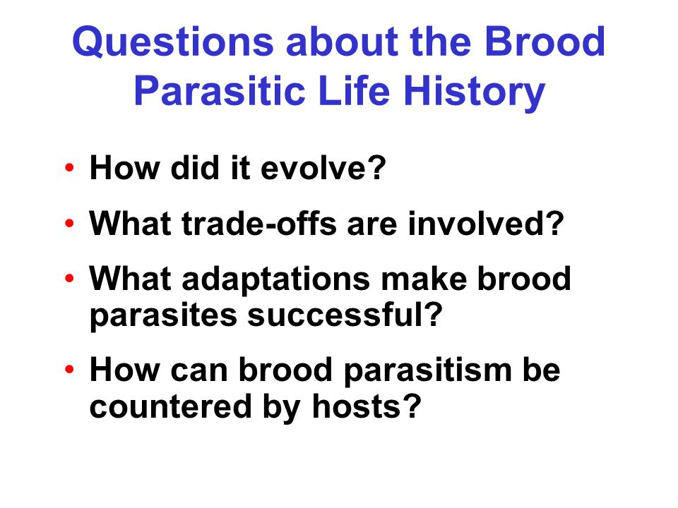 Questions about the Brood Parasitic Life History How did it evolve.