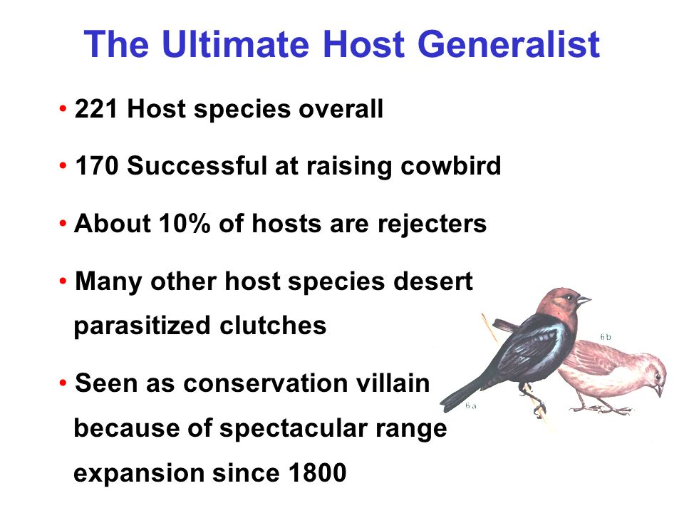 The Ultimate Host Generalist 221 Host species overall 170 Successful at raising cowbird About 10% of hosts are rejecters Many other host species desert parasitized clutches Seen as conservation villain because of spectacular range expansion since 1800