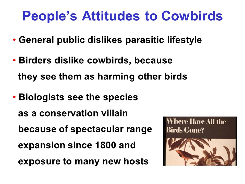 People's Attitudes to Cowbirds General public dislikes parasitic lifestyle Birders dislike cowbirds, because they see them as harming other birds Biologists see the species as a conservation villain because of spectacular range expansion since 1800 and exposure to many new hosts