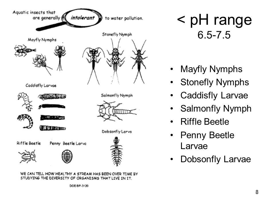 8 < pH range 6.5-7.5 Mayfly Nymphs Stonefly Nymphs Caddisfly Larvae Salmonfly Nymph Riffle Beetle Penny Beetle Larvae Dobsonfly Larvae