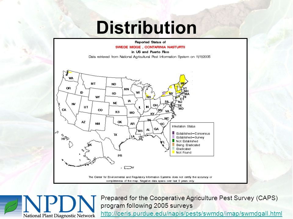 Distribution Prepared for the Cooperative Agriculture Pest Survey (CAPS) program following 2005 surveys http://ceris.purdue.edu/napis/pests/swmdg/imap/swmdgall.html http://ceris.purdue.edu/napis/pests/swmdg/imap/swmdgall.html