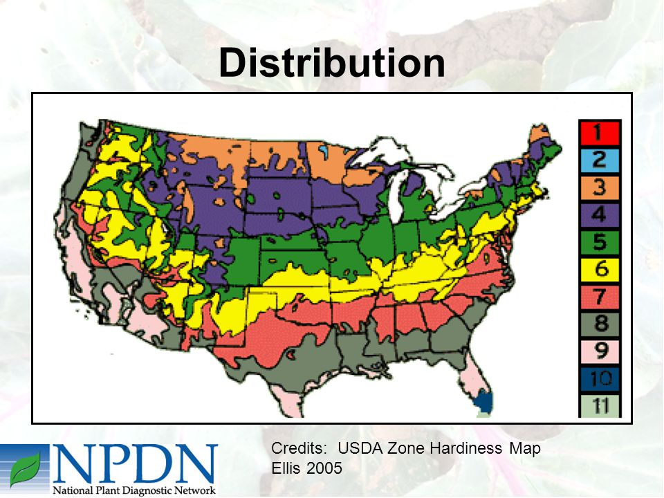 Distribution Credits: USDA Zone Hardiness Map Ellis 2005