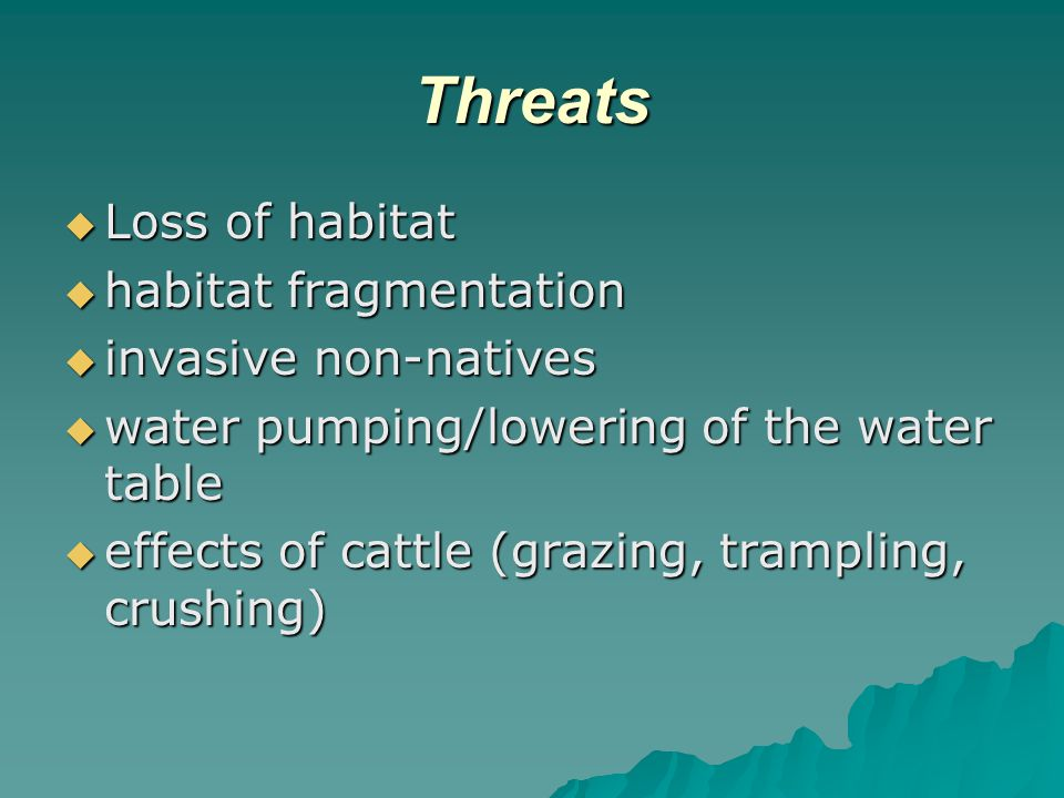 Threats  Loss of habitat  habitat fragmentation  invasive non-natives  water pumping/lowering of the water table  effects of cattle (grazing, trampling, crushing)