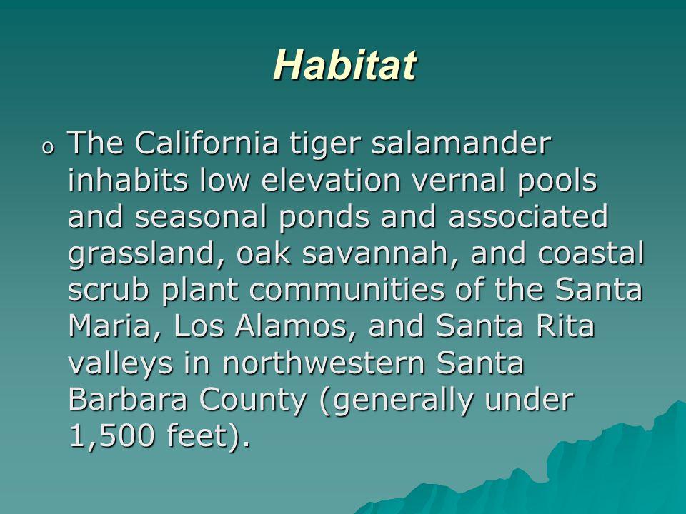 Habitat o The California tiger salamander inhabits low elevation vernal pools and seasonal ponds and associated grassland, oak savannah, and coastal scrub plant communities of the Santa Maria, Los Alamos, and Santa Rita valleys in northwestern Santa Barbara County (generally under 1,500 feet).
