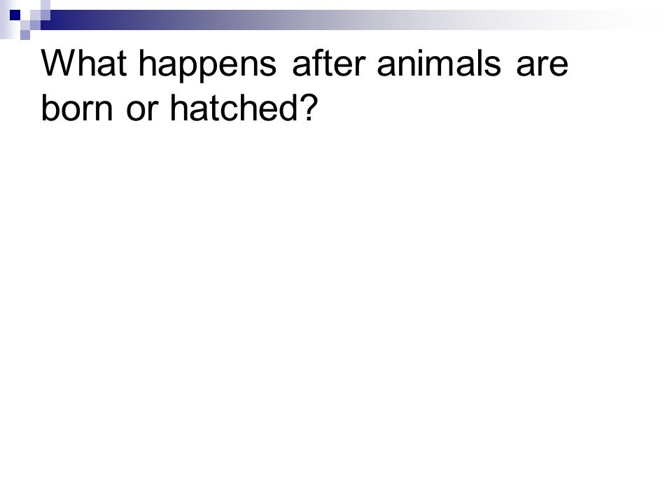 What happens after animals are born or hatched