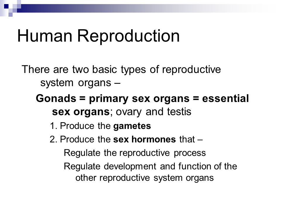 Human Reproduction There are two basic types of reproductive system organs – Gonads = primary sex organs = essential sex organs; ovary and testis 1.