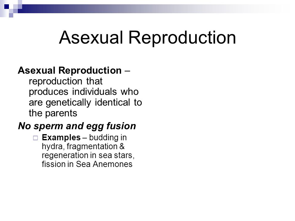 Asexual Reproduction Asexual Reproduction – reproduction that produces individuals who are genetically identical to the parents No sperm and egg fusion  Examples – budding in hydra, fragmentation & regeneration in sea stars, fission in Sea Anemones