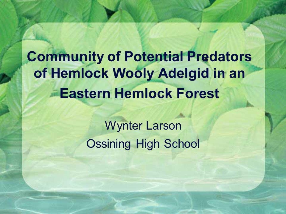 Community of Potential Predators of Hemlock Wooly Adelgid in an Eastern Hemlock Forest Wynter Larson Ossining High School