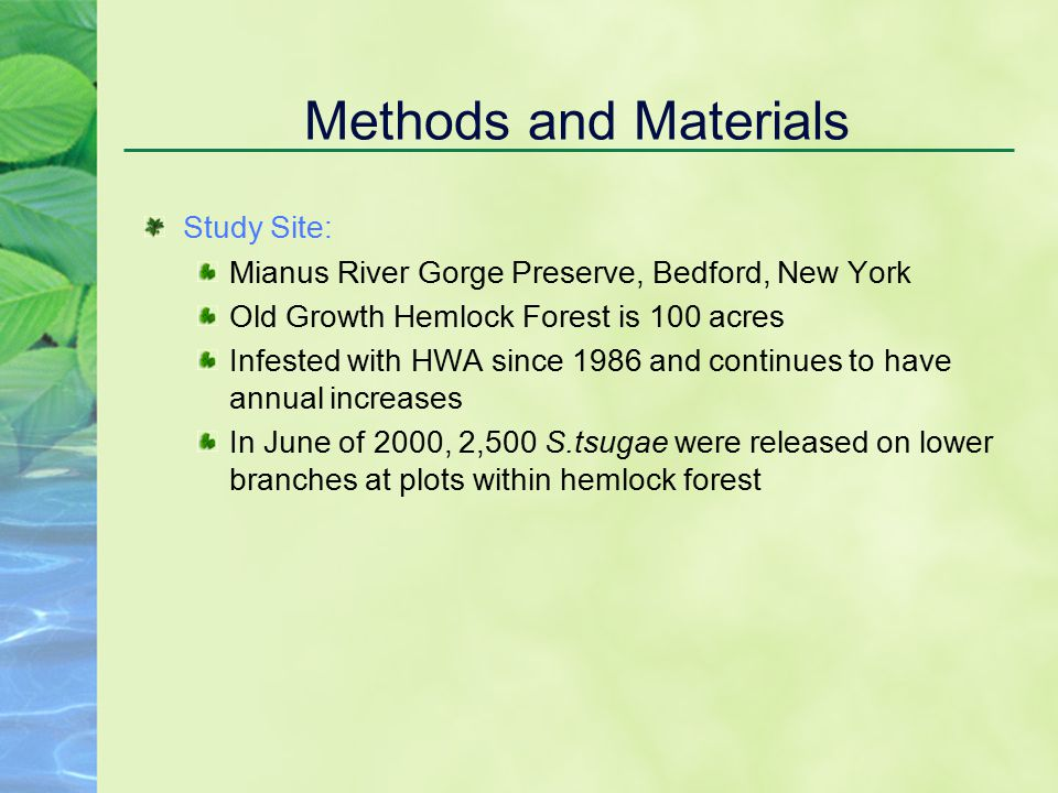 Methods and Materials Study Site: Mianus River Gorge Preserve, Bedford, New York Old Growth Hemlock Forest is 100 acres Infested with HWA since 1986 and continues to have annual increases In June of 2000, 2,500 S.tsugae were released on lower branches at plots within hemlock forest
