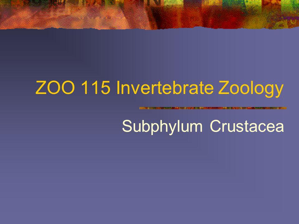 ZOO 115 Invertebrate Zoology Subphylum Crustacea