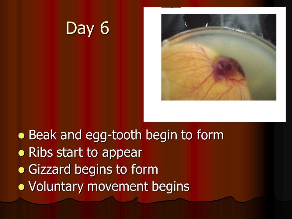 How many days does it take to hatch a chicken egg? 1. 21 days 2. 22 days 3. 20 days 4. 24 days