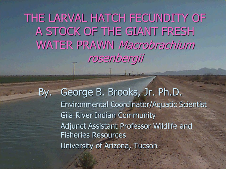 Introduction n n With few major Macrobrachium hatcheries in the continental U.S., shortages of available seed could occur if there were a sudden increase in demand for postlarvae.